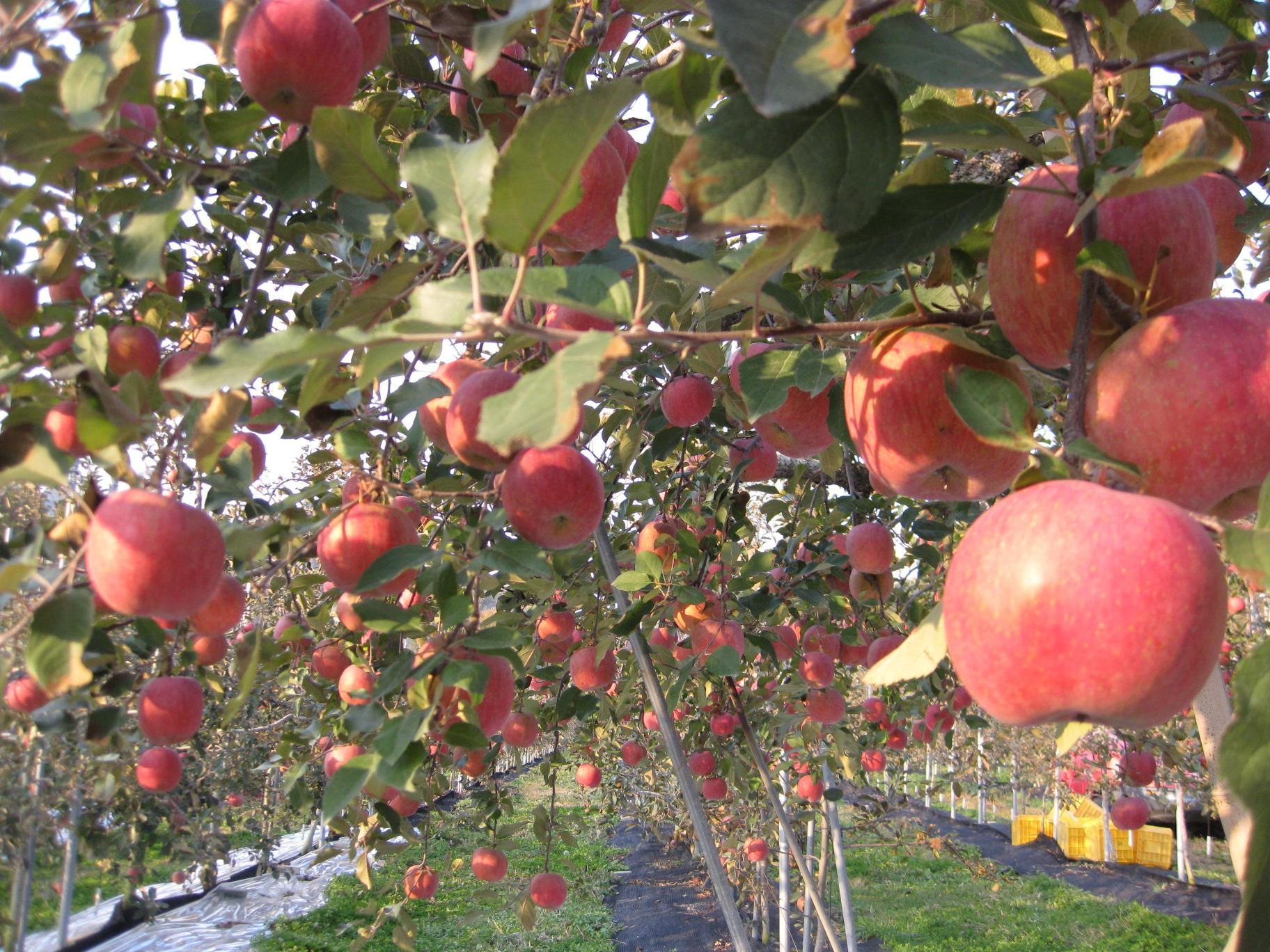 老木의 열매