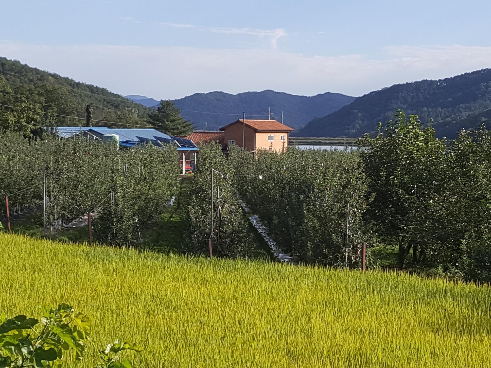 사과광덕농원 원경